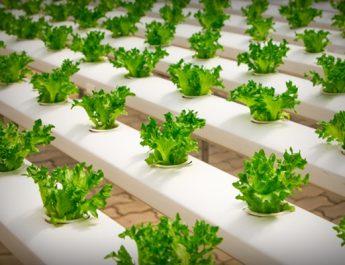 ¿La alimentación bio puede morir de éxito? por Esther Vives
