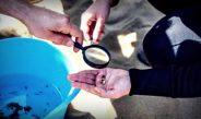 Un estudio alerta de la presencia de microplásticos en el 75% de los ríos y arroyos de España